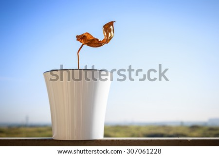 Dried plant in a flower pot on an open balcony - stock photo