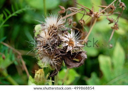 Dried plant on green foliage as analogy of death and life