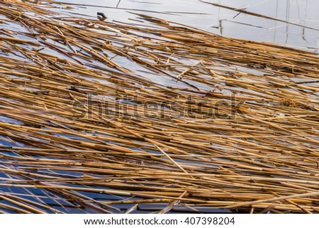 Dried reed on the lake shore background. Texture of the dry Yellow cane in the water. Natural abstract striped pattern with place for your text. Dry stalks of cane and blue sky reflection. Spring time - stock photo