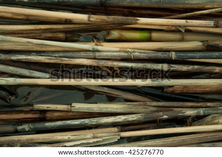 dried reeds on the water in the lake - stock photo