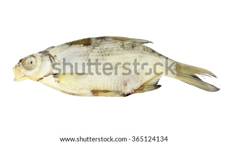 Dried roach close-up isolated on white background - stock photo