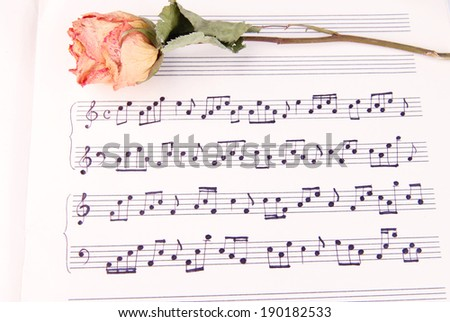 Dried rose flower on music book, close-up