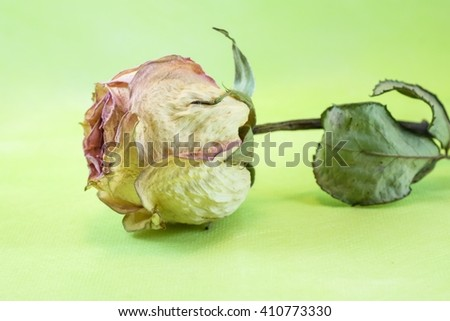 Dried rose on light green background - stock photo