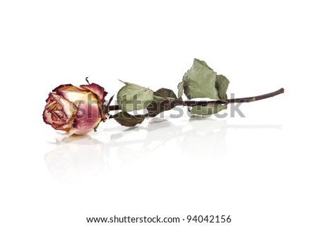 Dried roses isolated on white - stock photo