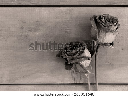 Dried roses on wood boards, in black and white - stock photo