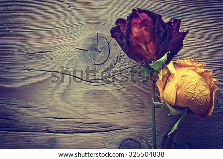 dried roses red and yellow lie on a wooden surface