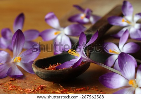 Dried saffron spice and crocus flowers - stock photo