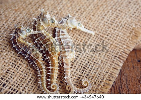 dried seahorse on wooden background - stock photo
