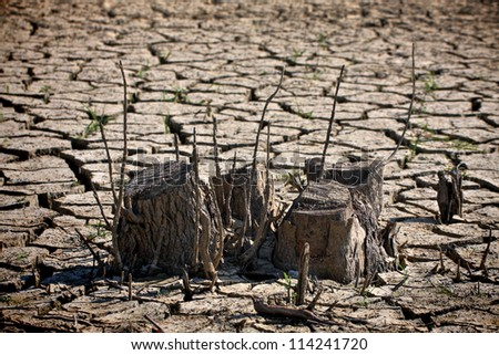 Dried soil and tree stump - stock photo