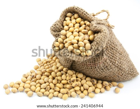 Dried soybean in canvas sack on white background - stock photo
