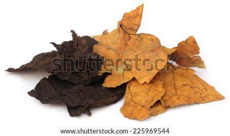 Dried tobacco leaves over white background - stock photo