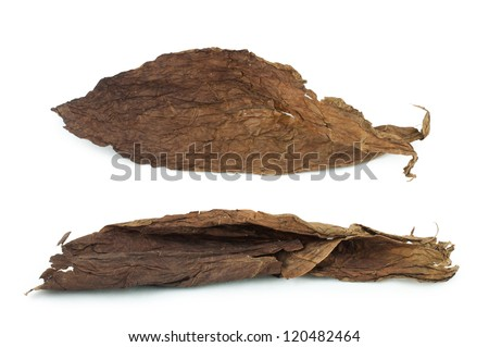Dried tobacco leaves white isolated. Cuban aged tobacco - stock photo