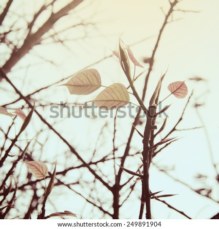 Dried tree and leaf with vintage filter style - stock photo