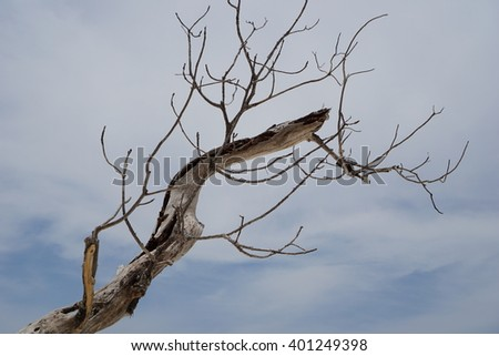dried tree timber with cloudy sky - stock photo