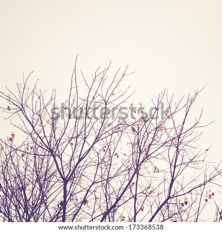 dried tree with retro filter effect - stock photo