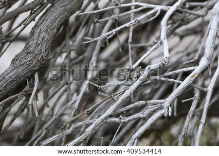 Dried twigs and branches striped wood background wallpaper