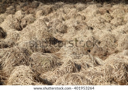 Dried up grass, shaped into many small hills