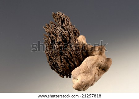 dried up seaweed on a stone - stock photo
