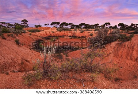 dried water hole in red soil of Australian outback between eucalyptus trees and bushes at sunset