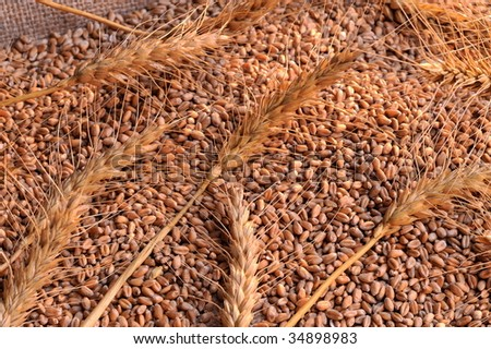 Cereal Grains Seeds Beans Stock Photo 418575892 Shutterstock