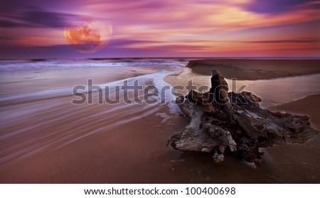 Drift wood at sunset on sandy beach  and full moon rise - stock photo