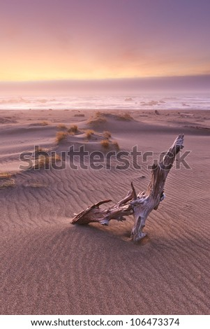 Drift wood is bathed in warm foggy light on a coastal sunset. - stock photo