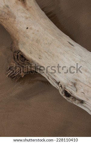 drift wood log washed up on sandy surf beach