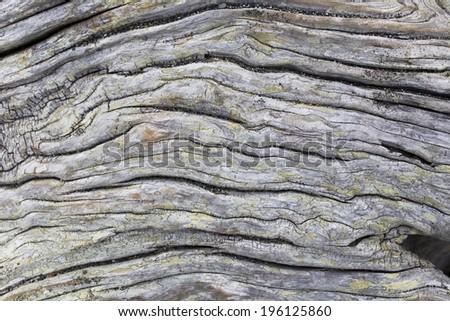 Drift Wood Texture Background - stock photo