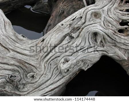 driftwood - stock photo