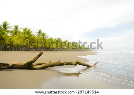 Driftwood and coconut palms on the deserted Playa Linda on the Pacific Coast of Costa Rica - stock photo