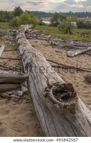 Driftwood at Falls On The Ohio State Park