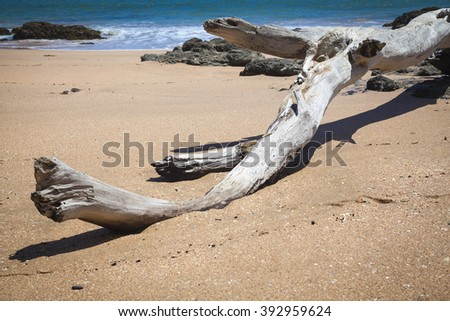 Driftwood at the beach