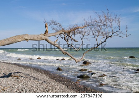 driftwood at the costline of the national park jasmund on ruegen - stock photo