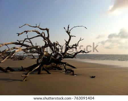 Ocean Oaks Jekyll Island Ga
