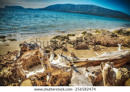 driftwood by Mugoni beach shoreline. Processed for hdr tone mapping effect - stock photo