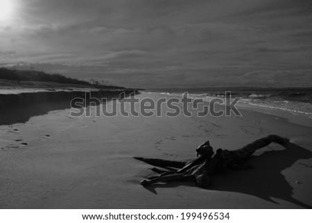 driftwood gum tree bribie island beach queensland australia - stock photo