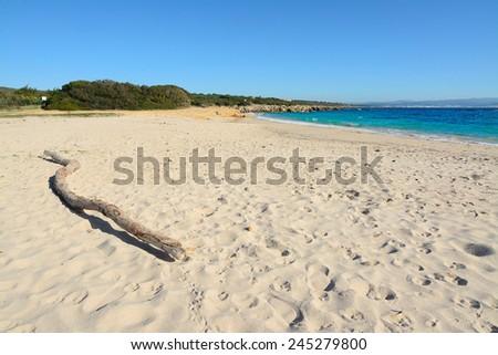 driftwood in Lazzaretto beach. Shot in Sardinia, Italy - stock photo