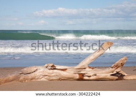 driftwood log on white sandy shore, clear sunny day at a surf beach, Gisborne, East Coast, North Island, New Zealand  - stock photo