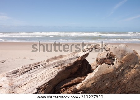 driftwood log on white sandy surf beach  - stock photo
