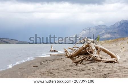 Driftwood near a Canadian lake - stock photo