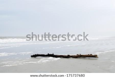 Driftwood near Hilton Head Island, SC on the Atlantic Ocean. - stock photo