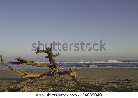 Driftwood on a deserted beach forming a natural sculpture with breaking waves in evening sunlight - stock photo