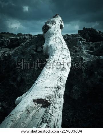 Driftwood on beach, green edition - stock photo