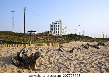 driftwood on sand dunes at durban's beachfront South Africa - stock photo