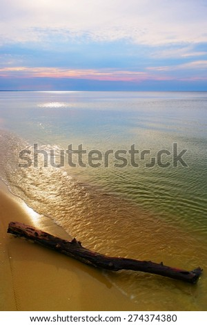 Driftwood on the beach. Baltic sea coast, Pomerania, northern Poland.  - stock photo