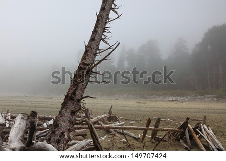 Driftwood on the coast of Pacific ocean in the foggy morning (Ucluelet. Vancouver Island. British Columbia. Canada) - stock photo
