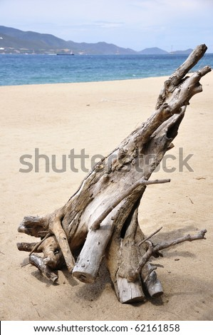Driftwood on the Nha-Trang Beach in Vietnam - stock photo