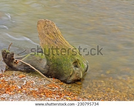 Driftwood on the shore of a river.  - stock photo