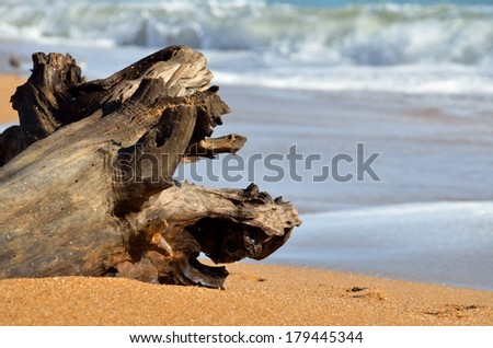 Driftwood on the water's edge on the east coast of Florida, USA. - stock photo