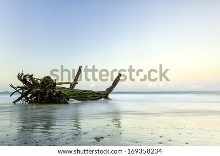 Driftwood photographed in the soft early dawn light. - stock photo